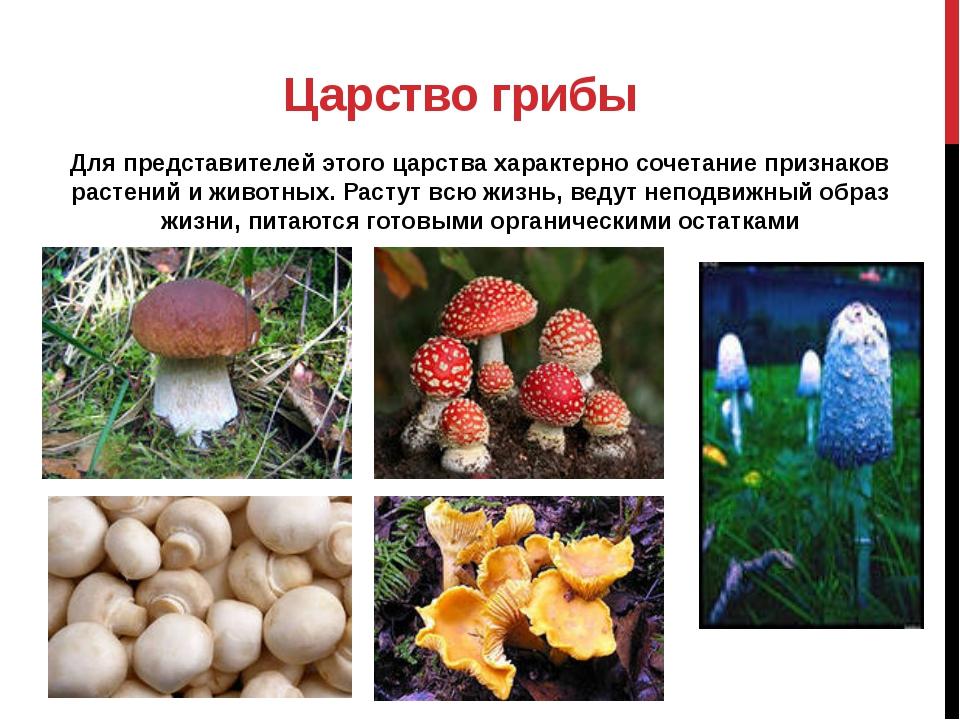 Царство грибы Для представителей этого царства характерно сочетание признаков...
