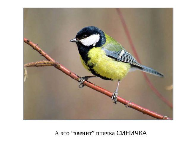 "А это ""звенит"" птичка СИНИЧКА"