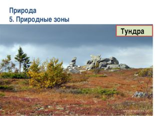 Природа 5. Природные зоны Тундра