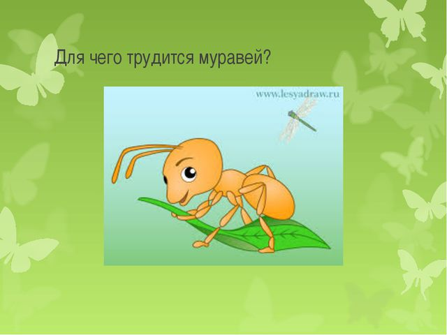 Для чего трудится муравей?