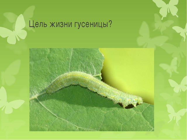 Цель жизни гусеницы?