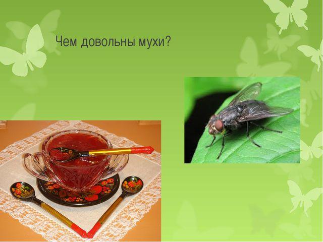 Чем довольны мухи?