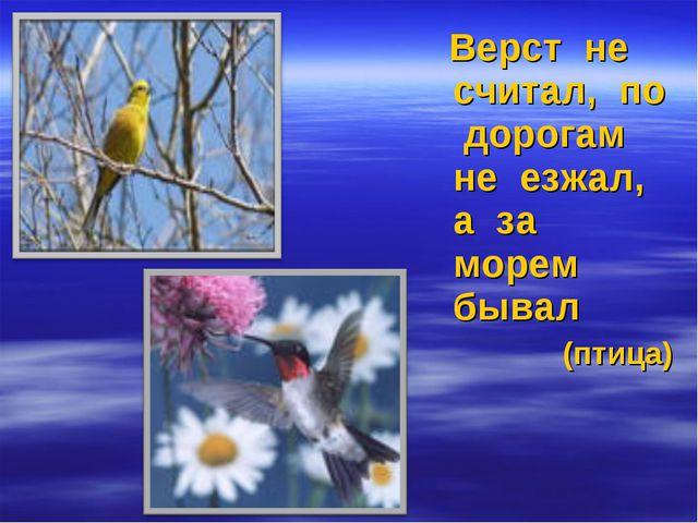 Верст не считал, по дорогам не езжал, а за морем бывал (птица)