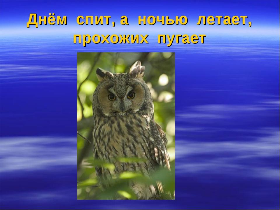 Днём спит, а ночью летает, прохожих пугает