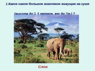 1.Какое самое большое животное живущее на суше (высота до 3, 5 метров, вес до