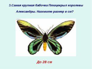 3.Самая крупная бабочка Птицекрыл королевы Александры. Назовите размер в см?