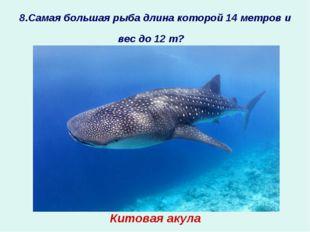 8.Самая большая рыба длина которой 14 метров и вес до 12 т? ? Китовая акула