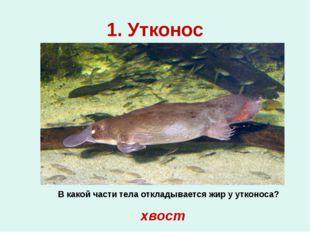 1. Утконос В какой части тела откладывается жир у утконоса? хвост