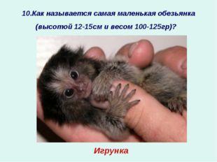 10.Как называется самая маленькая обезьянка (высотой 12-15см и весом 100-125г