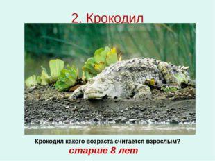 2. Крокодил Крокодил какого возраста считается взрослым? старше 8 лет