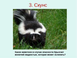 3. Скунс Какое животное в случае опасности брызгает вонючей жидкостью, котора