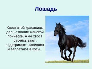 Лошадь Хвост этой красавицы дал название женской причёске. А её хвост расчёсы