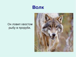 Волк Он ловил хвостом рыбу в проруби.