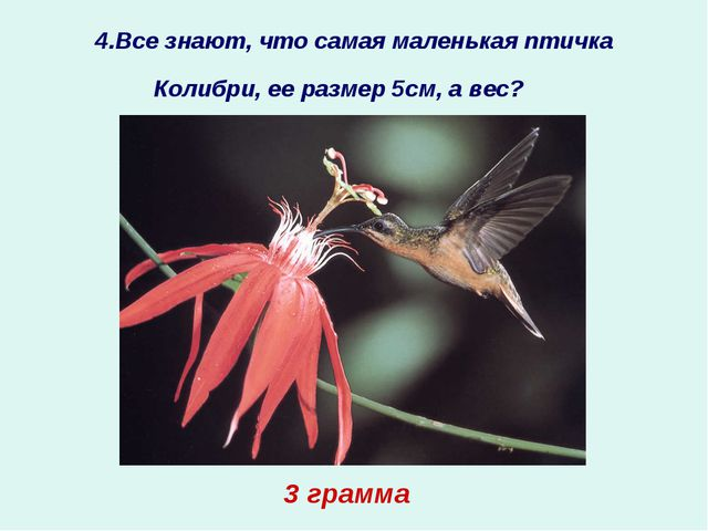 4.Все знают, что самая маленькая птичка Колибри, ее размер 5см, а вес?  ? 3...