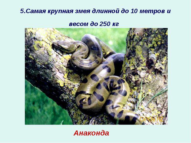 5.Самая крупная змея длинной до 10 метров и весом до 250 кг ? Анаконда