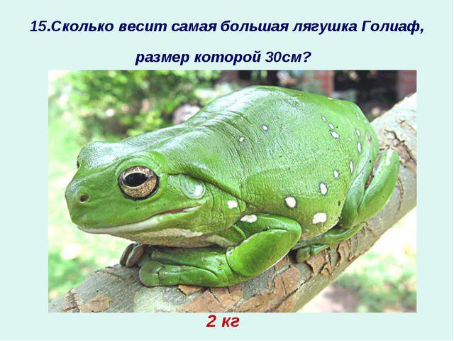 15.Сколько весит самая большая лягушка Голиаф, размер которой 30см? ? 2 кг