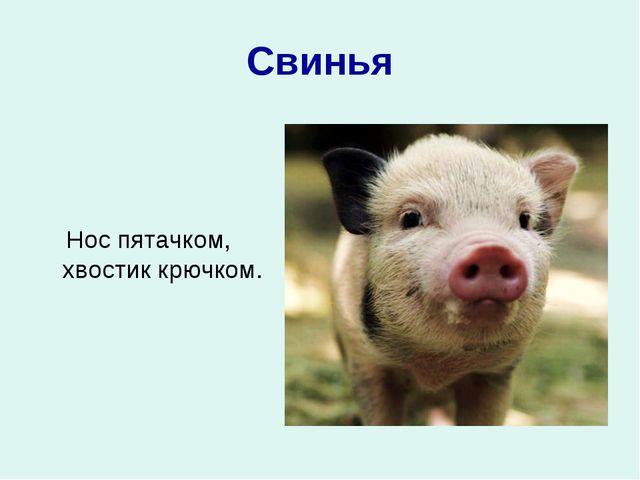 Свинья Нос пятачком, хвостик крючком.