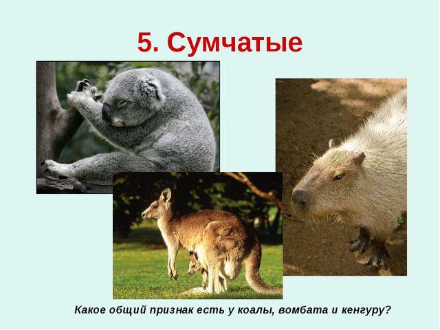 5. Сумчатые Какое общий признак есть у коалы, вомбата и кенгуру?