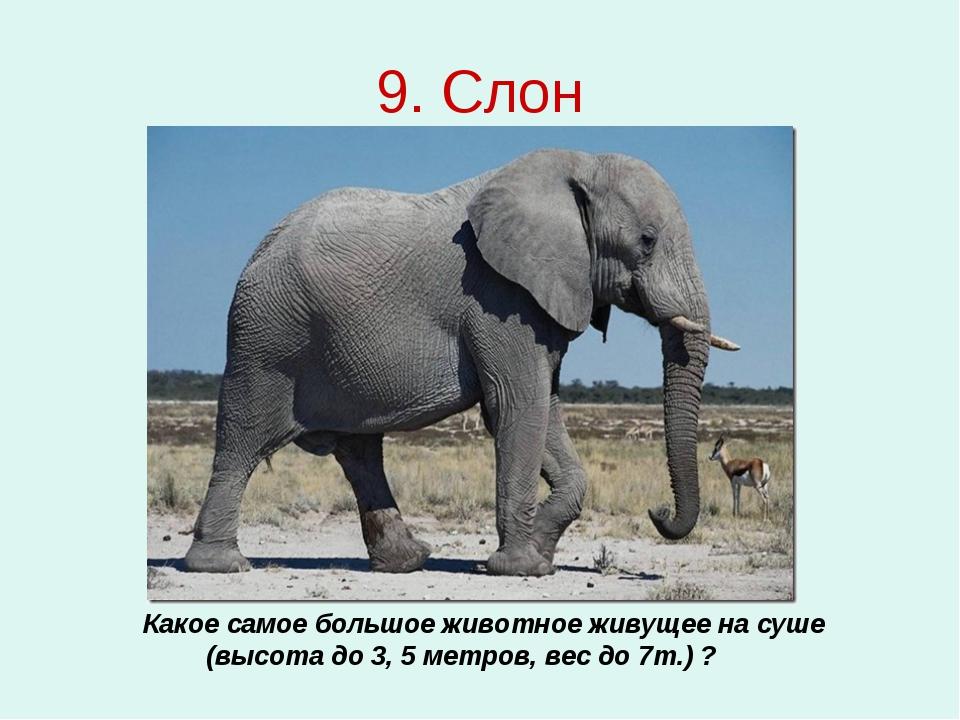 9. Слон Какое самое большое животное живущее на суше (высота до 3, 5 метров,...