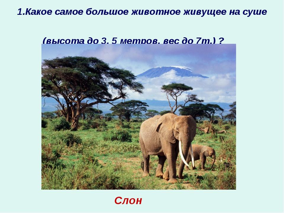 1.Какое самое большое животное живущее на суше (высота до 3, 5 метров, вес до...