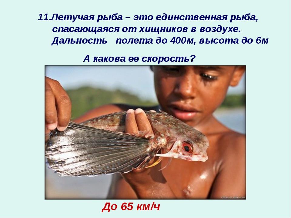 11.Летучая рыба – это единственная рыба, спасающаяся от хищников в воздухе. Д...