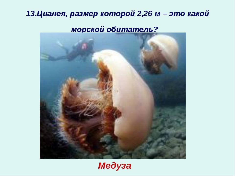 13.Цианея, размер которой 2,26 м – это какой морской обитатель? ? Медуза
