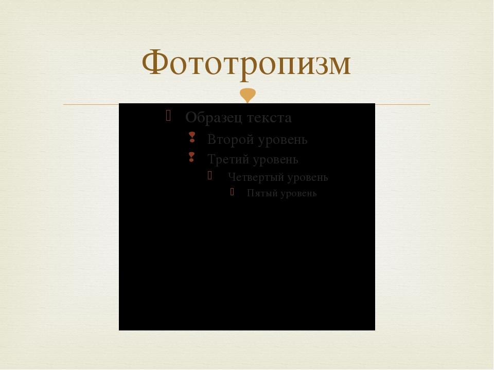 Фототропизм 