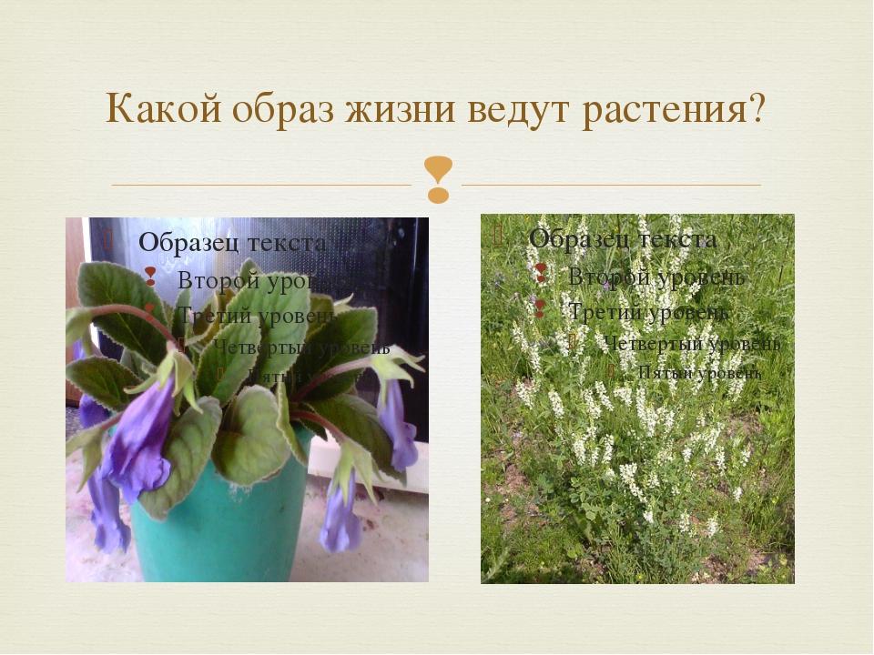 Какой образ жизни ведут растения? 