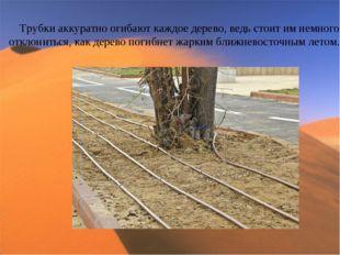 Трубки аккуратно огибают каждое дерево, ведь стоит им немного отклониться, ка