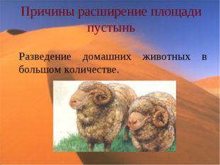 Причины расширение площади пустынь Разведение домашних животных в большом кол