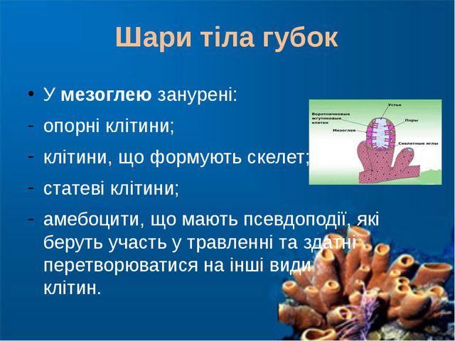 У мезоглею занурені: опорні клітини; клітини, що формують скелет; статеві клі...
