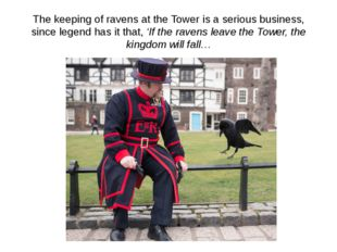 The keeping of ravens at the Tower is a serious business, since legend has it