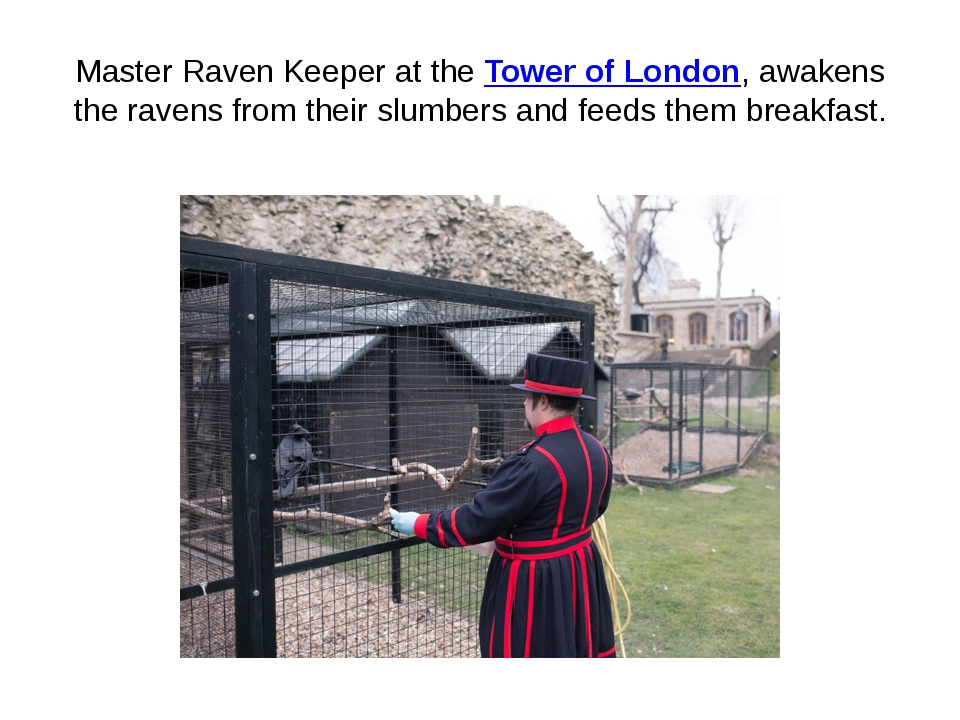 Master Raven Keeper at the Tower of London, awakens the ravens from their slu...