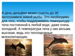 В день дельфин может съесть до 30 килограммов живой рыбы. Это необходимо для