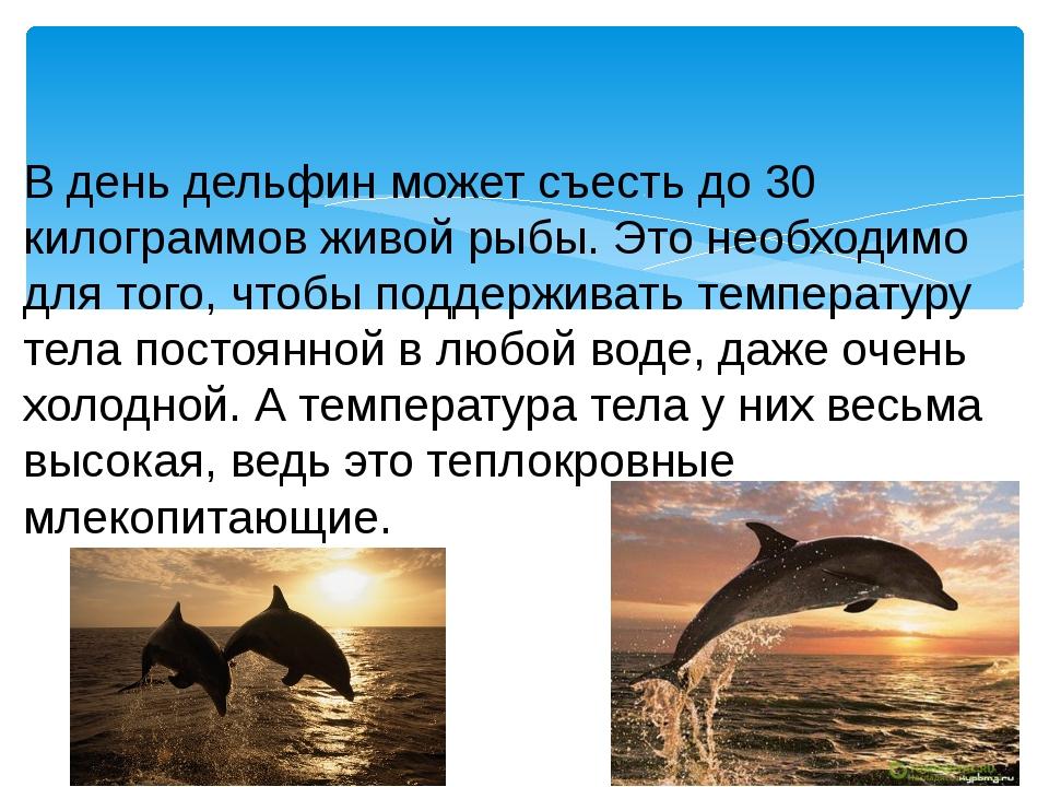 В день дельфин может съесть до 30 килограммов живой рыбы. Это необходимо для...