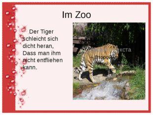 Im Zoo Der Tiger schleicht sich dicht heran, Dass man ihm nicht entfliehen ka