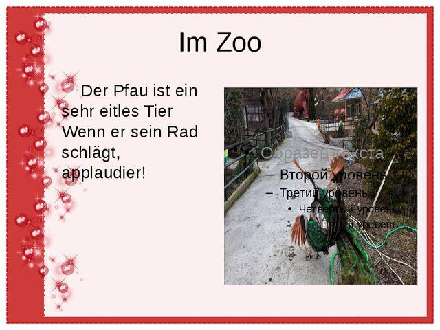 Im Zoo Der Pfau ist ein sehr eitles Tier Wenn er sein Rad schlägt, applaudier!