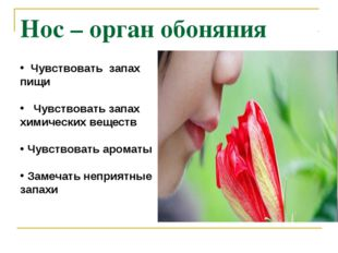 Нос – орган обоняния Чувствовать запах пищи Чувствовать запах химических веще