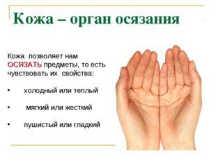 Кожа – орган осязания Кожа позволяет нам ОСЯЗАТЬ предметы, то есть чувствоват