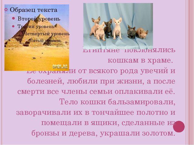 Египтяне поклонялись кошкам в храме. Её охраняли от всякого рода увечий и бол...