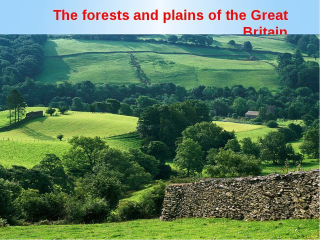 The forests and plains of the Great Britain