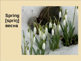 Spring [spriŋ] весна