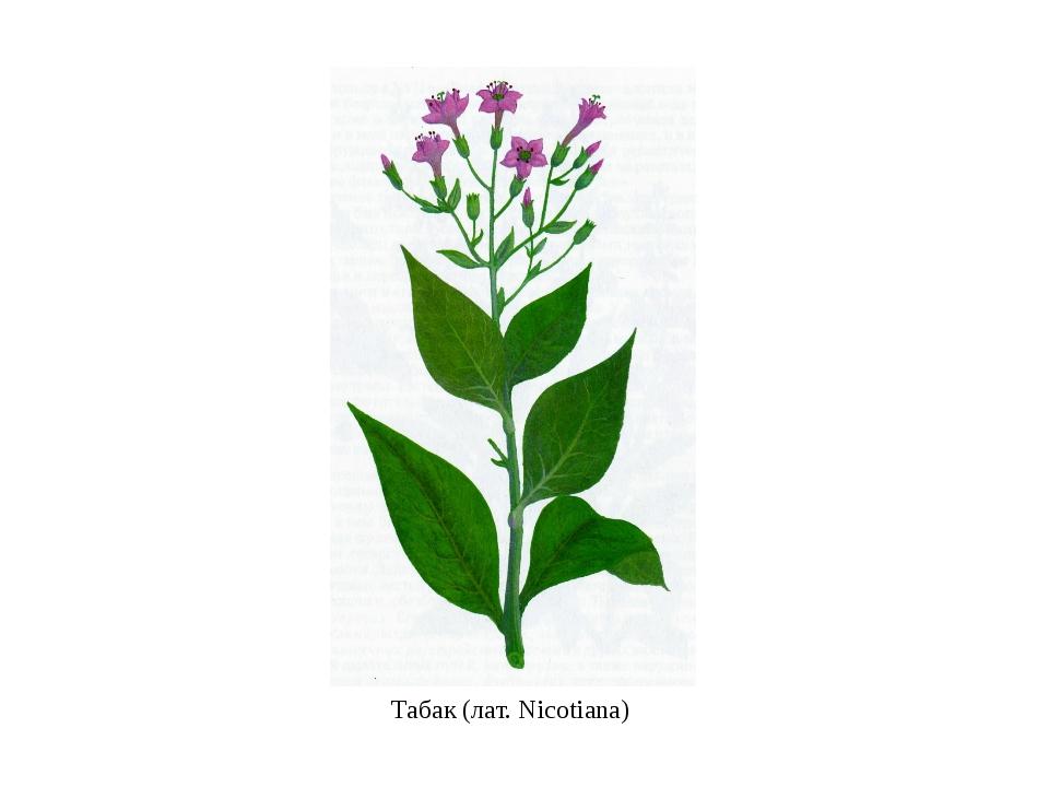 Табак(лат.Nicotiana)