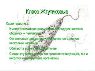Класс Жгутиковые. Характеристика: Имеют постоянную форму тела благодаря налич