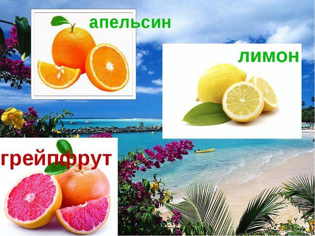 апельсин лимон грейпфрут