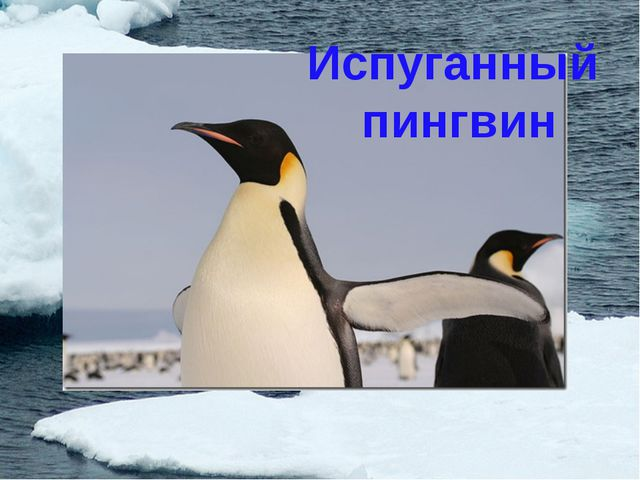 Испуганный пингвин