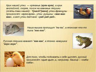 Крик нашей утки — кряканье (кряк-кряк), а крик английской, скорее, похож на