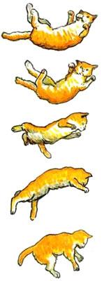 Движения кошки при падении
