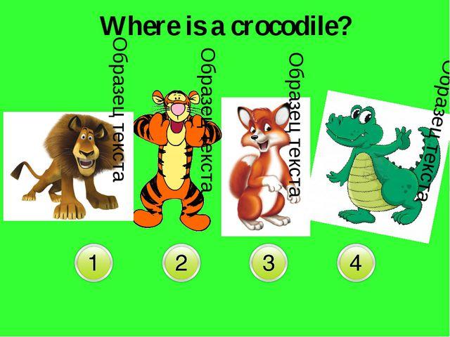 Where is a crocodile?