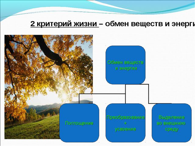 2 критерий жизни – обмен веществ и энергии.